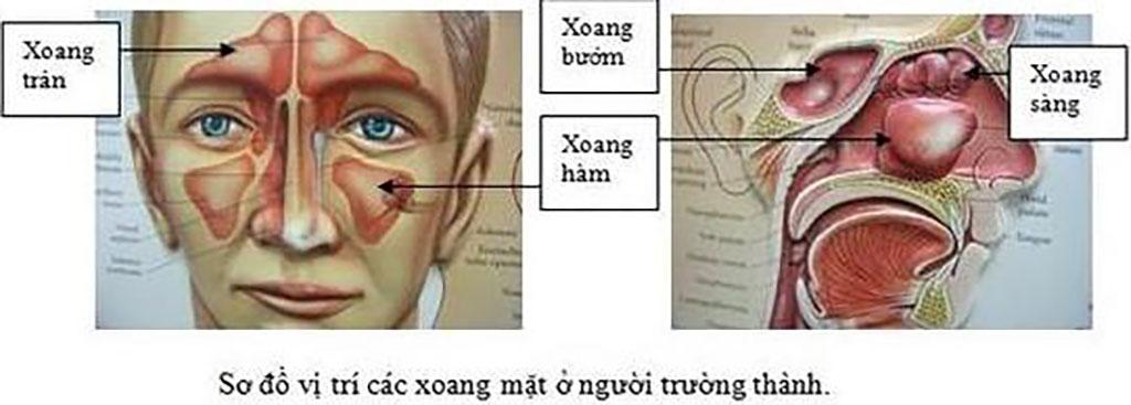 Bệnh Viêm Xoang vàQuan điểm Điều trị tích cựctại Bệnh viện Tai Mũi Họng Sài Gòn